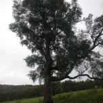 Trees at the top