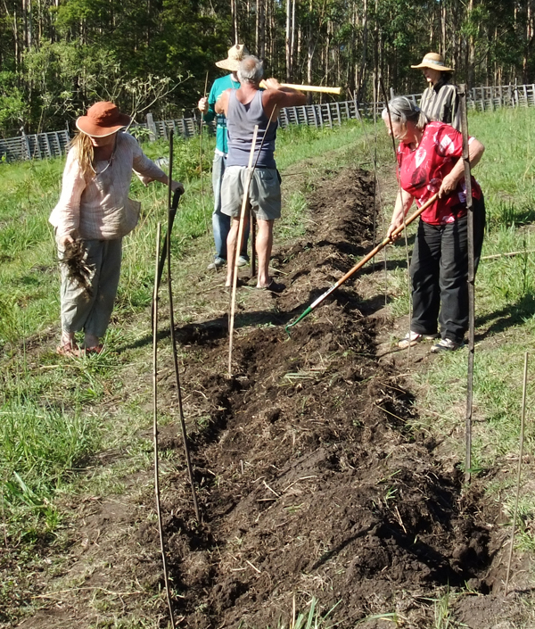 Biochar learning camp Double digging the beds at the hemp trial