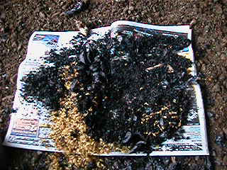 charred coffee husks from the tlud