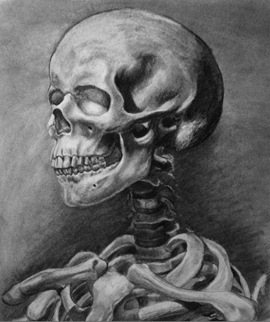 Skull drawn with charcoal